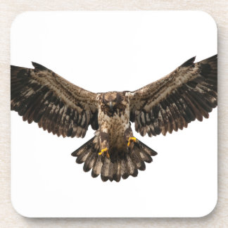 Bald eagle Juvenile coming in for a landing Beverage Coasters