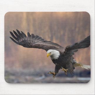 Bald Eagle landing Mouse Pad