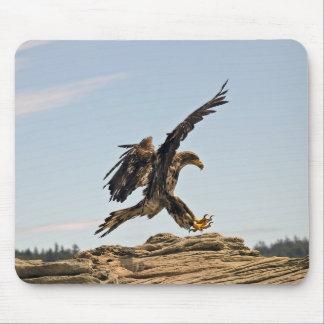 Bald Eagle Landing Mousepad
