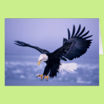 Bald Eagle Landing Wings Spread in a Storm, Card