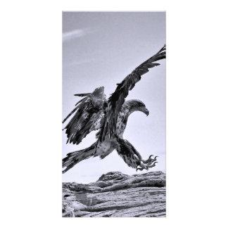 Bald Eagle Lanind Photo Card