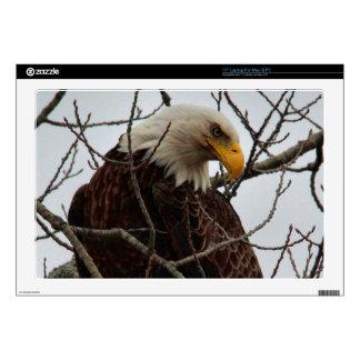 Bald Eagle Laptop Skins