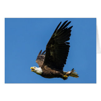 Bald Eagle, Lets Do Lunch Card