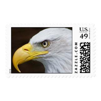 Bald Eagle Macro Postage