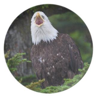 Bald Eagle Melamine Plate