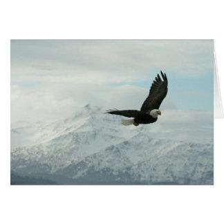 Bald eagle & mountains card
