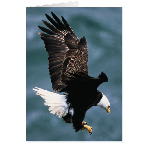 Bald Eagle - National Bird Of The United States Card
