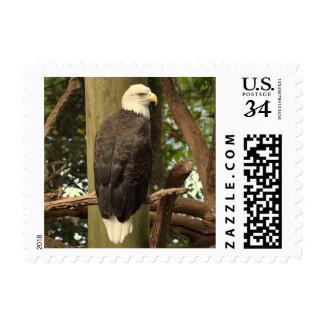 Bald Eagle National Bird (United States) Postage Stamp