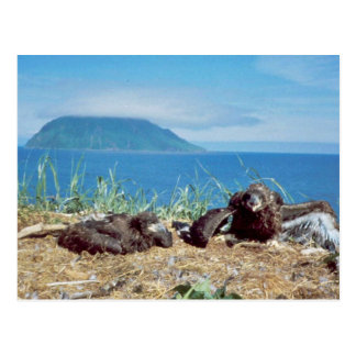 Bald Eagle Nest Postcard