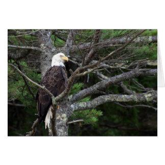 Bald Eagle Note Card