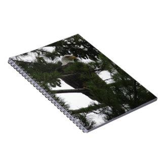 Bald Eagle Spiral Note Books