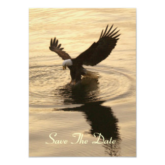 Bald Eagle & Ocean Sunlight Invitation Cards