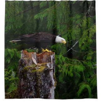 Bald Eagle on a stump Shower Curtain