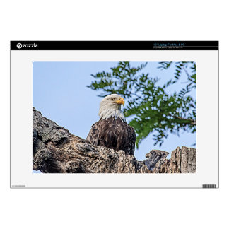 Bald Eagle on a tree branch Laptop Decals