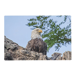 Bald Eagle on a tree branch Placemat