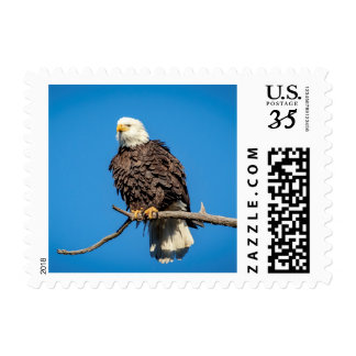 Bald Eagle on a tree branch Postage