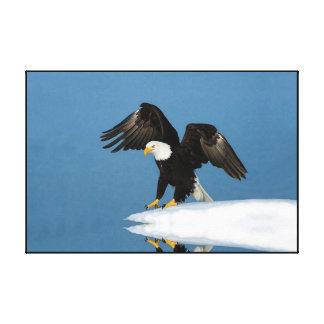Bald Eagle on ice Wrapped Canvas Print