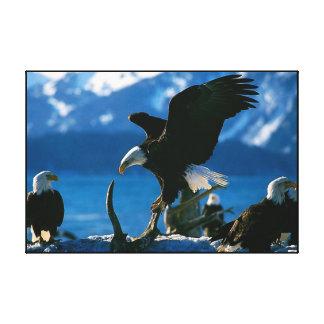 Bald Eagle on log Wrapped Canvas Print