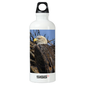 Bald Eagle on Spring Nest Aluminum Water Bottle