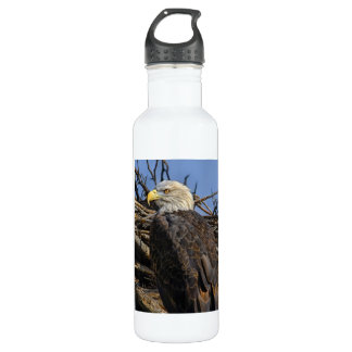 Bald Eagle on Spring Nest Stainless Steel Water Bottle
