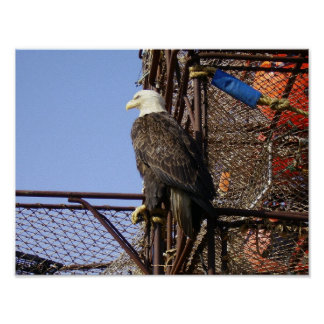 Bald eagle on Stacked Crabpots Print