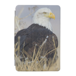 Bald Eagle on the ground iPad Mini Cover