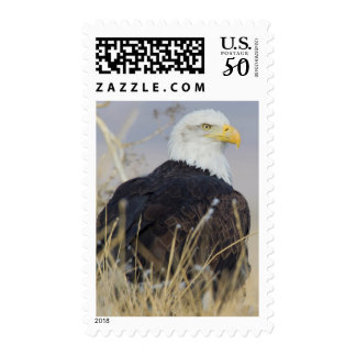 Bald Eagle on the ground Postage