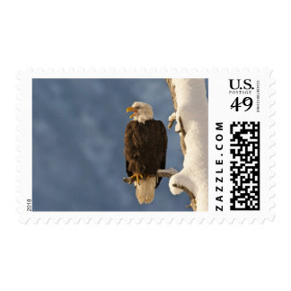 Bald eagle perched on branch 2 postage