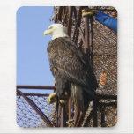 Bald Eagle Perched on Crab Pots Mouse Pads