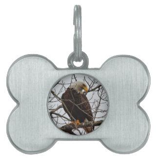 Bald Eagle Pet ID Tag