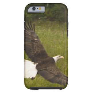 Bald Eagle phone case Tough iPhone 6 Case