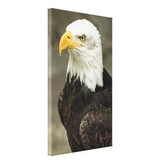 Bald Eagle Photo Canvas Print