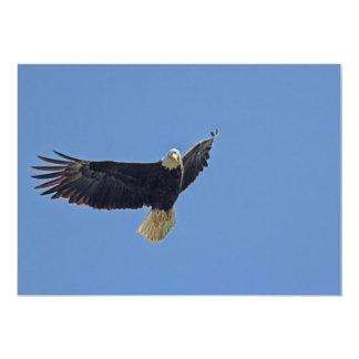 Bald Eagle Photo Card