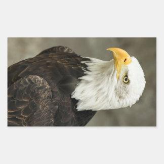 Bald Eagle Photo Rectangular Sticker