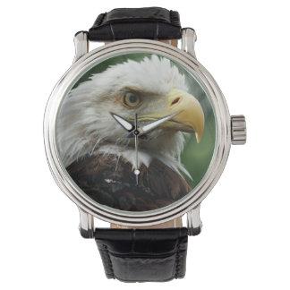 Bald Eagle Photo Watch