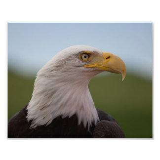 Bald Eagle Art Photo