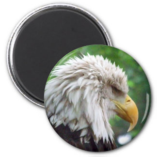 Bald Eagle Photography Refrigerator Magnets