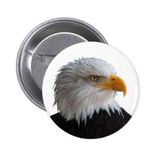 Bald eagle pinback button