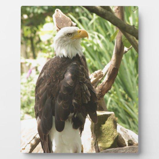 Bald Eagle Plaque