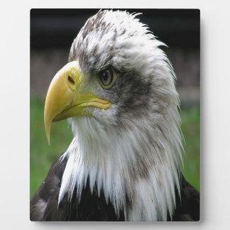 Bald Eagle Display Plaque