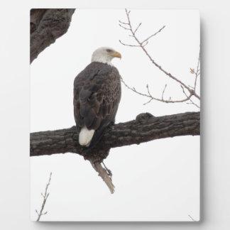 Bald Eagle Photo Plaque