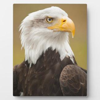 Bald Eagle Plaques