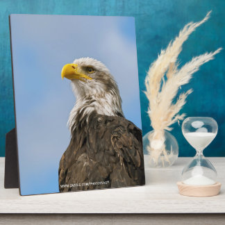 Bald Eagle Photo Plaques