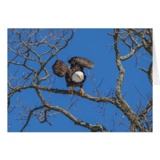 Bald Eagle Poised For Takeoff Card