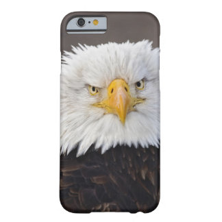 Bald Eagle Portrait, Bald Eagle in flight, Barely There iPhone 6 Case