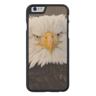 Bald Eagle Portrait, Bald Eagle in flight, Carved Maple iPhone 6 Case