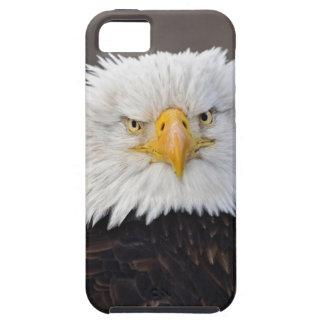Bald Eagle Portrait, Bald Eagle in flight, iPhone 5 Covers