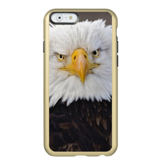 Bald Eagle Portrait, Bald Eagle in flight, Incipio Feather Shine iPhone 6 Case