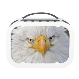 Bald Eagle Portrait, Bald Eagle in flight, Yubo Lunchboxes