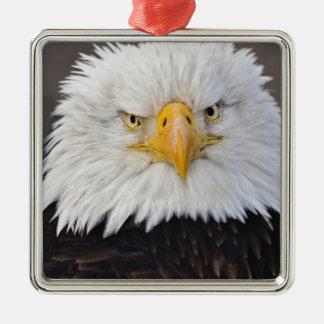 Bald Eagle Portrait, Bald Eagle in flight, Metal Ornament